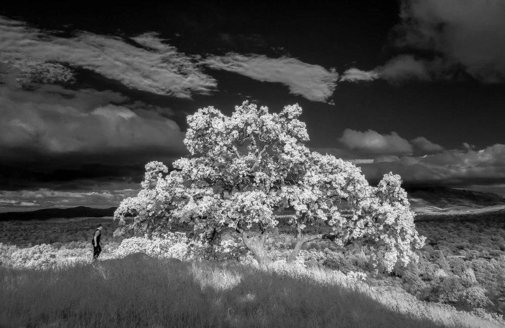 Infrared-3.jpg