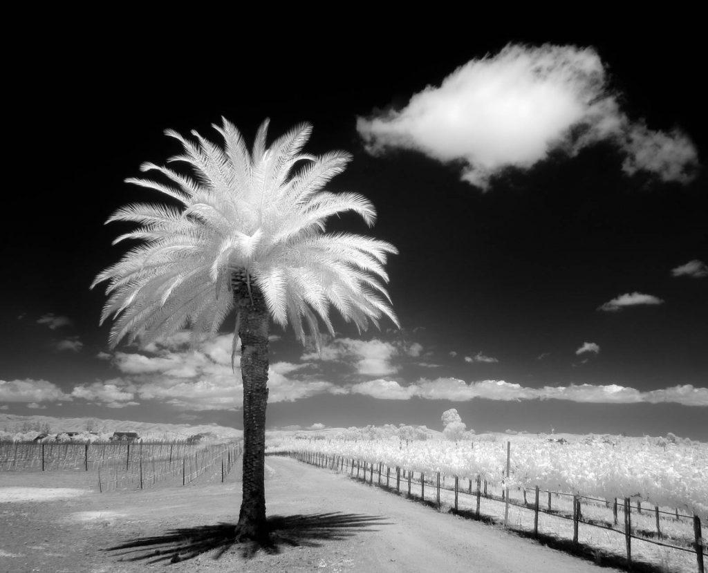 Infrared-5.jpg