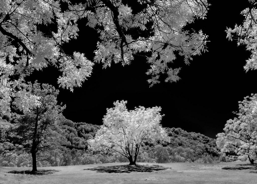 Infrared-8.jpg